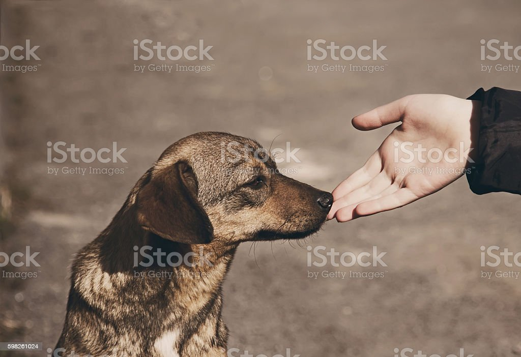 Child hand and lonely homeless dog stock photo