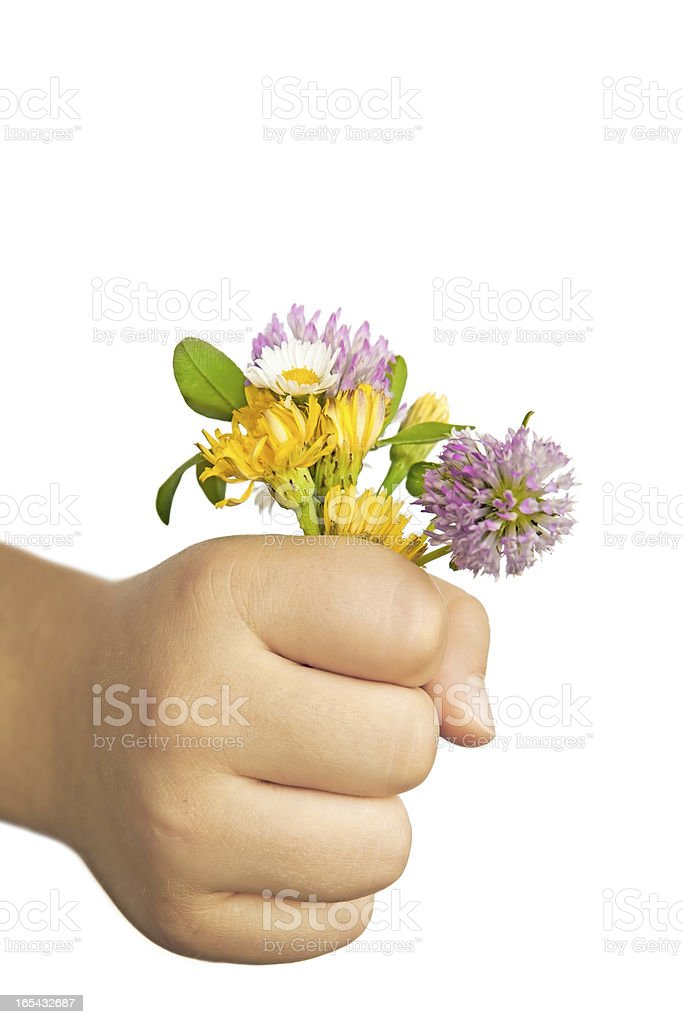 Child Hand Holding Flowers - with clipping path royalty-free stock photo