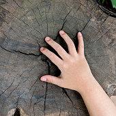 Child hand on old tree stump