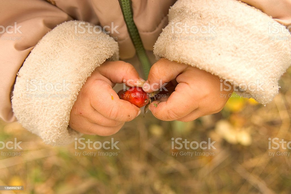 Child hands royalty-free stock photo