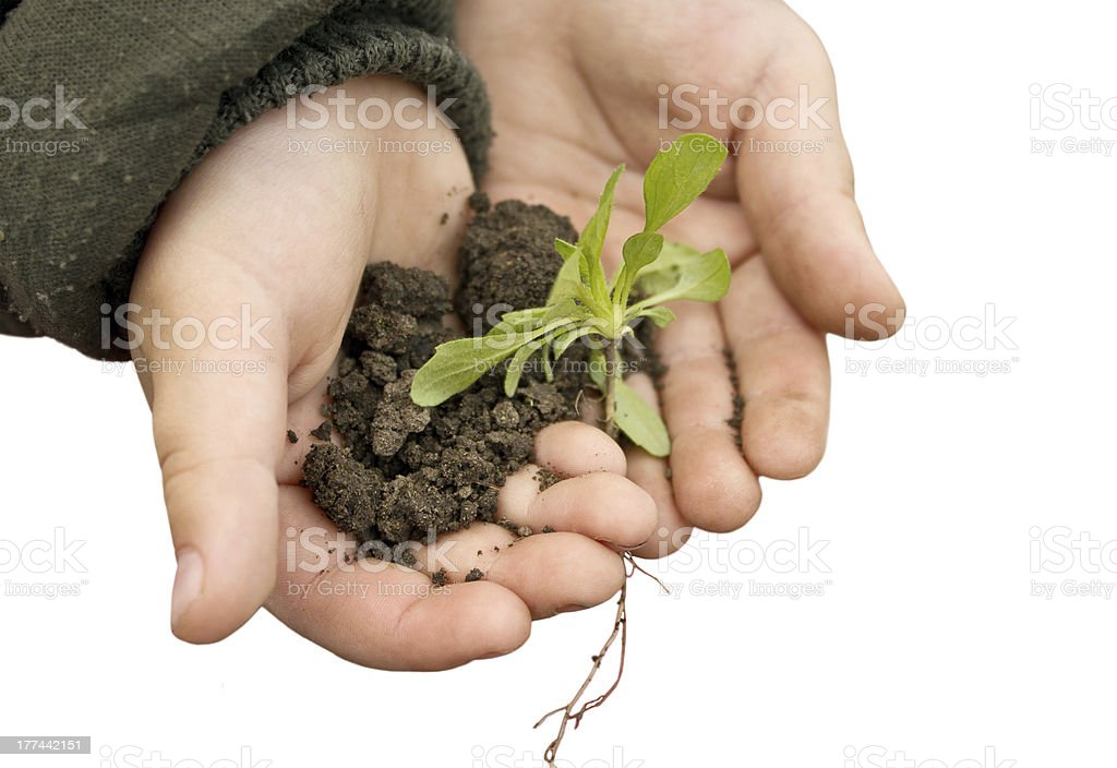 Child holding a plant and soil royalty-free stock photo
