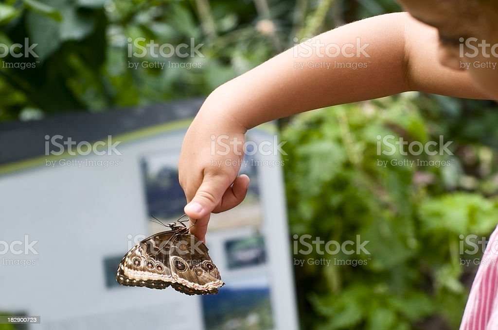 Child Holding Butterfly Speckled Wood ( Pararge aegeria ) stock photo