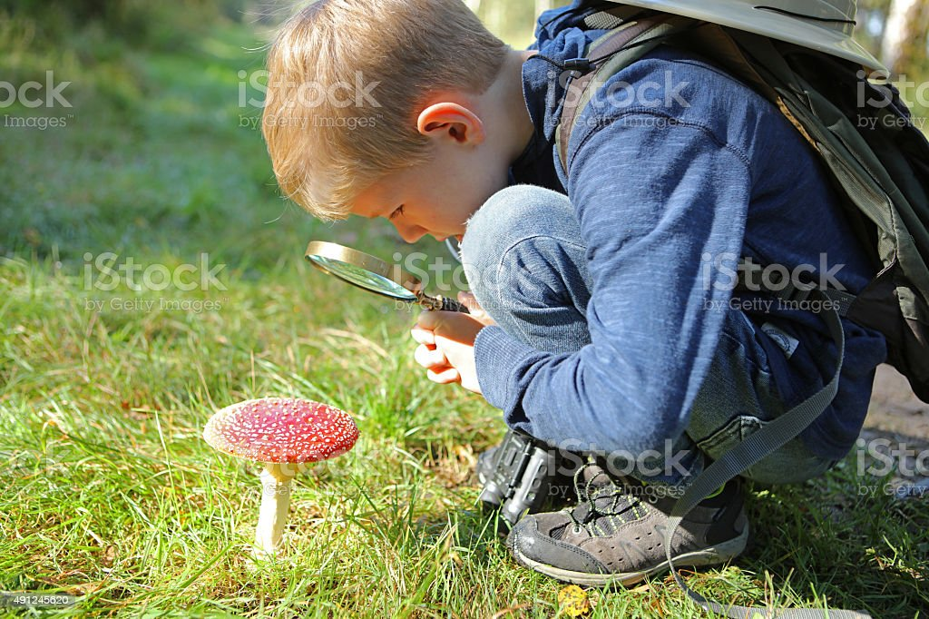 Child Holding Magnifying Glass Looking at Fly Agaric Mushroom stock photo