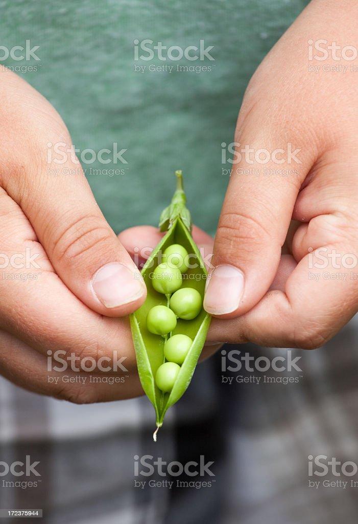 Child Holding Pea Pod royalty-free stock photo