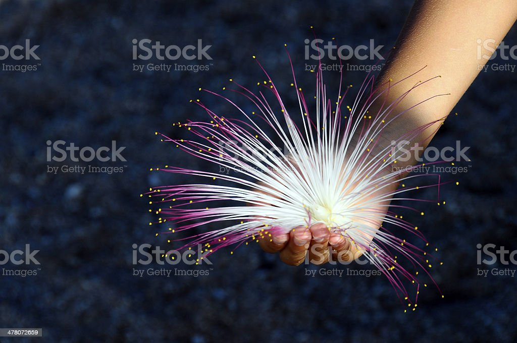 Child holding pink and white flower royalty-free stock photo