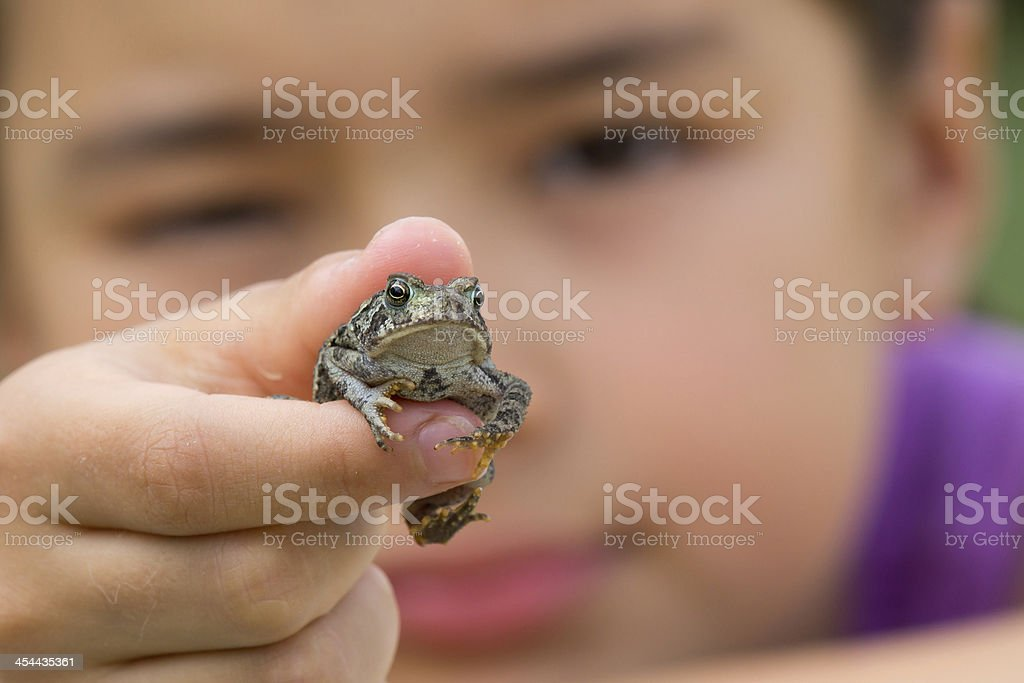 Child holding toad stock photo