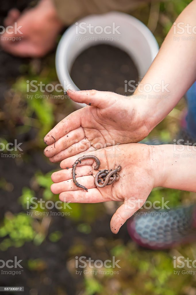 Child Holding Worms in Hand stock photo
