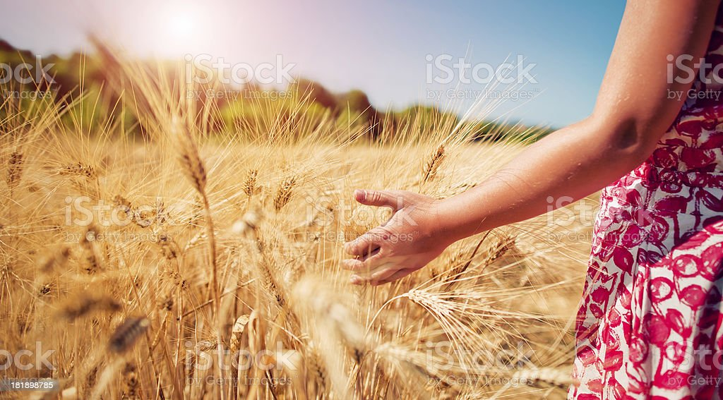 Child in the wheat field stock photo