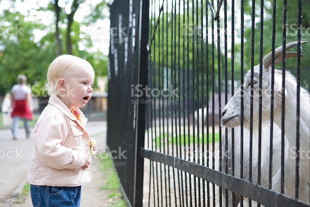 child in the zoo royalty-free stock photo