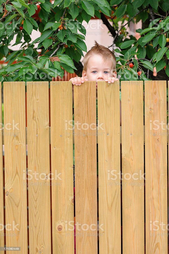 Child peaking behind fence stock photo