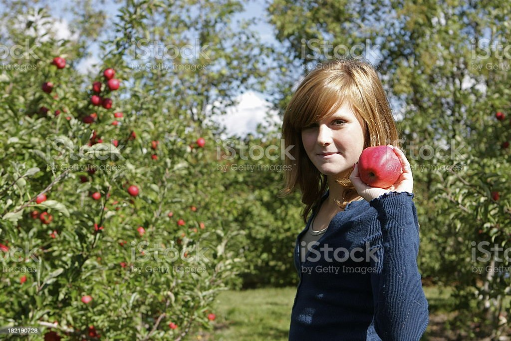 Child Picking Apples in Orchard royalty-free stock photo