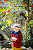 Child picking ripe pomegranate in sunny tree garden in Italy