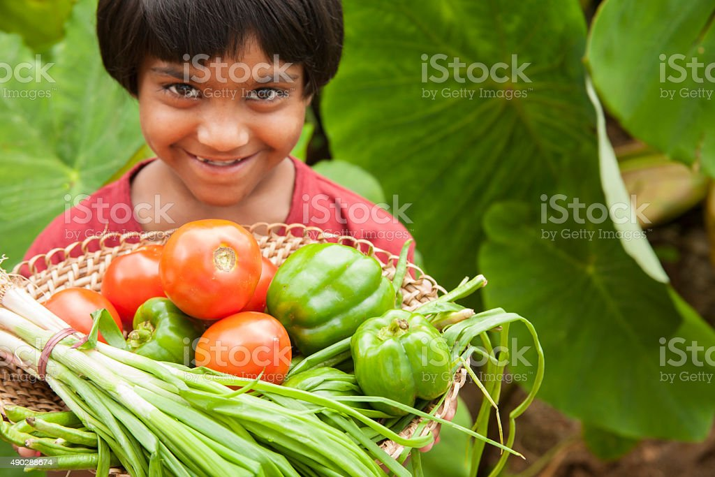 Child proudly harvests vegetables from community garden. stock photo