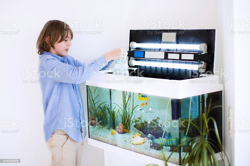Child putting new fish in an aquarium stock photo