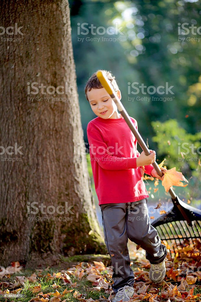 Child raking autumn leaves in the front yard stock photo