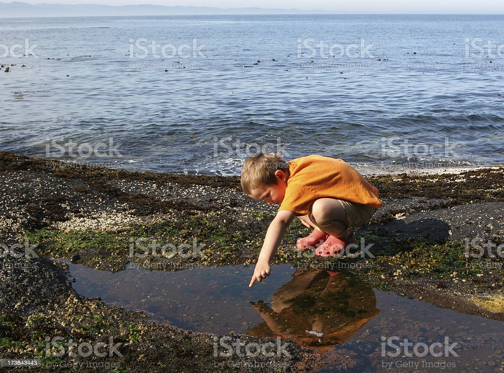 Child Searching In Tidal Pool stock photo