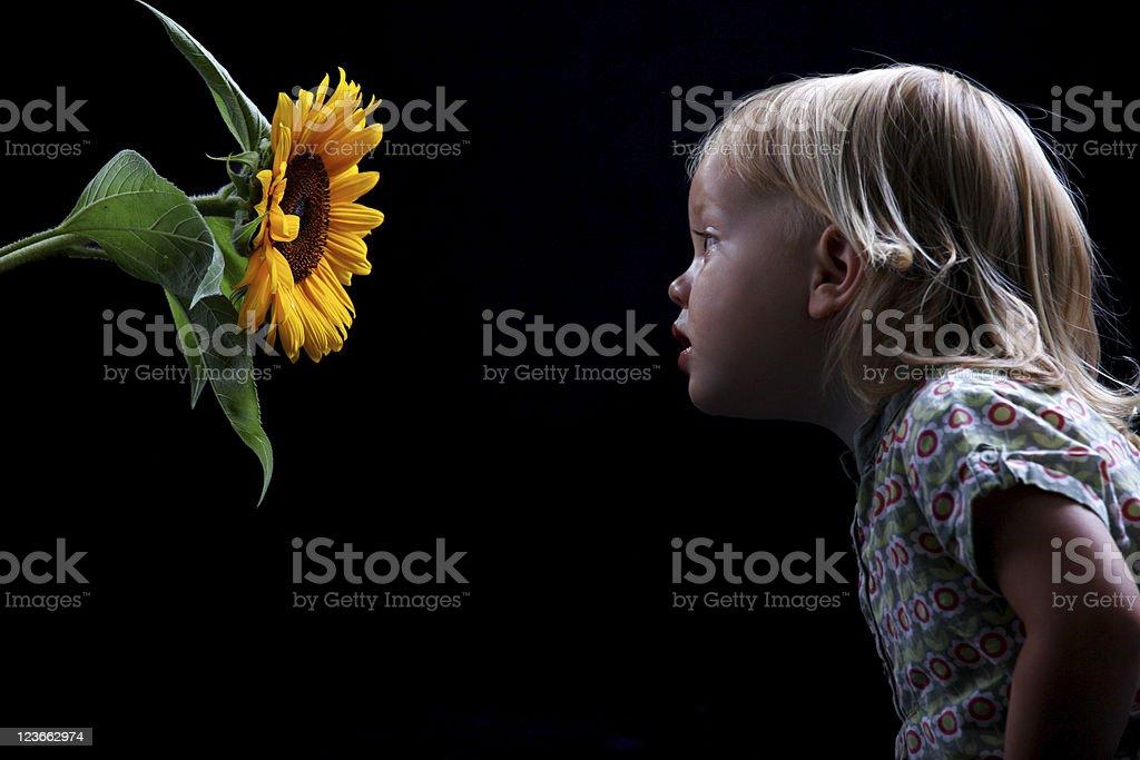 Child smelling sunflower stock photo