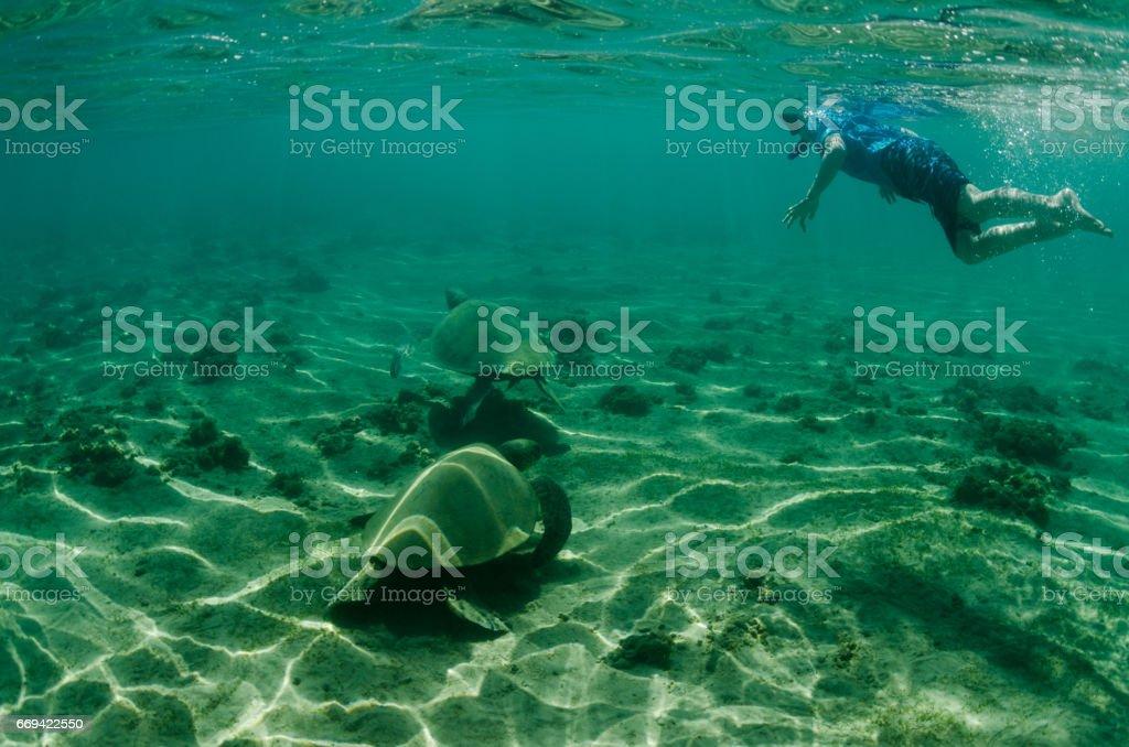 Child swimming with turtle underwater stock photo