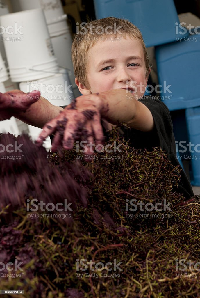 Child throwing crushed grape stems royalty-free stock photo