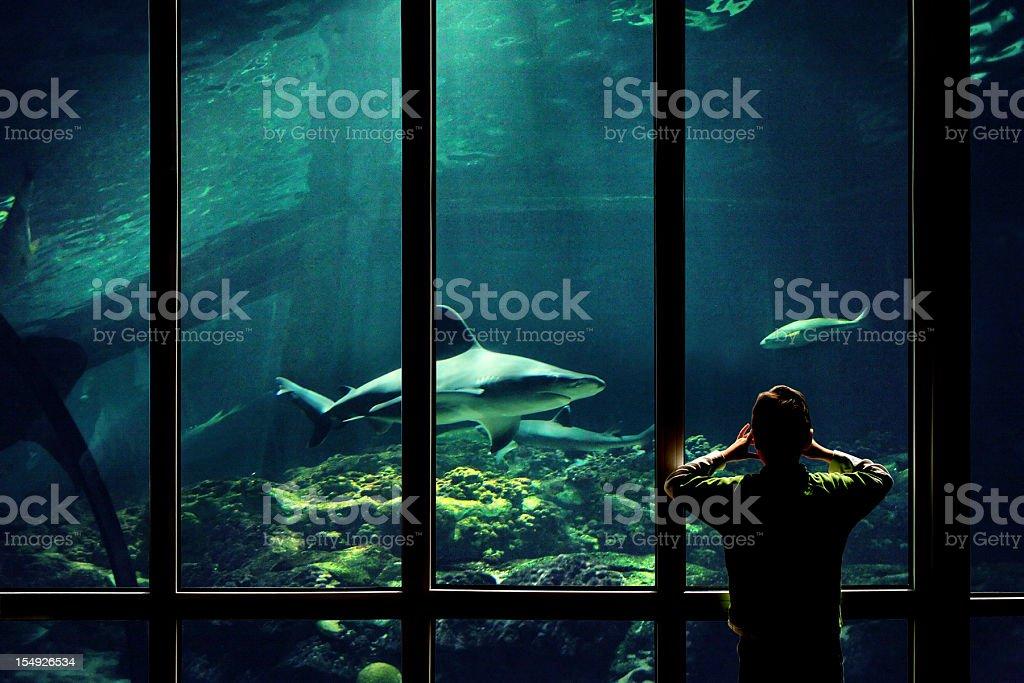 child watching sharks in aquarium stock photo