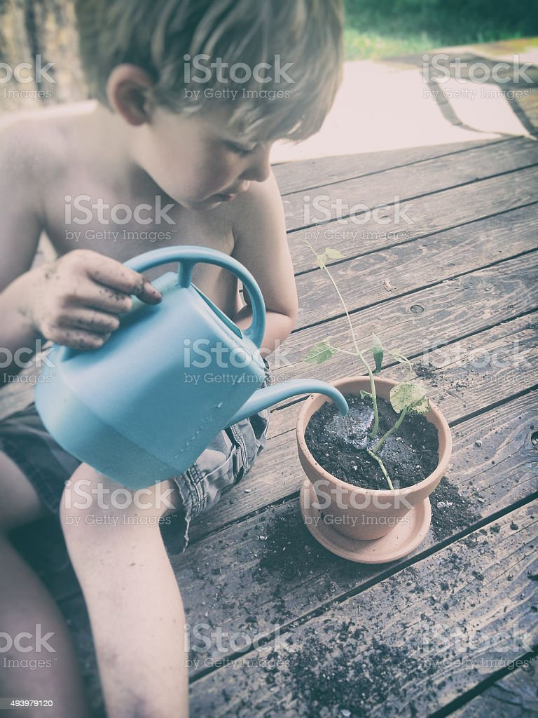 Child watering a seedling in a pot stock photo