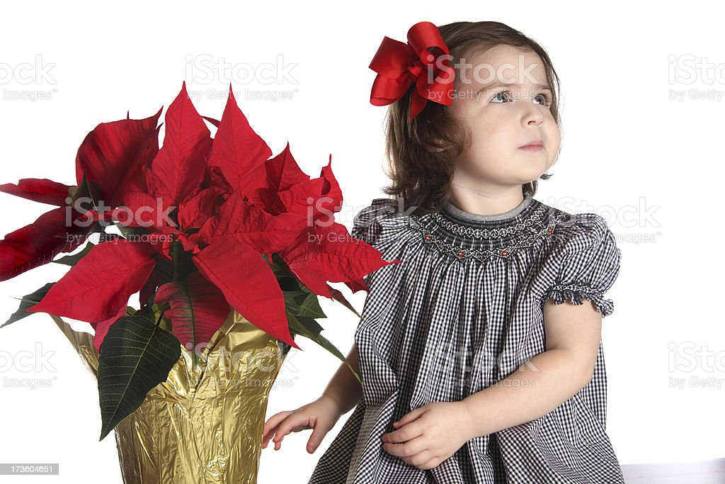 Child with a Poinsettia royalty-free stock photo