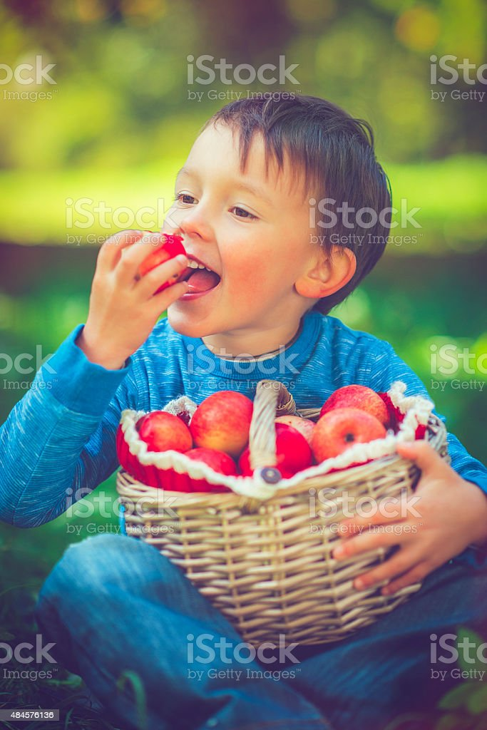 Child with basket of apples stock photo