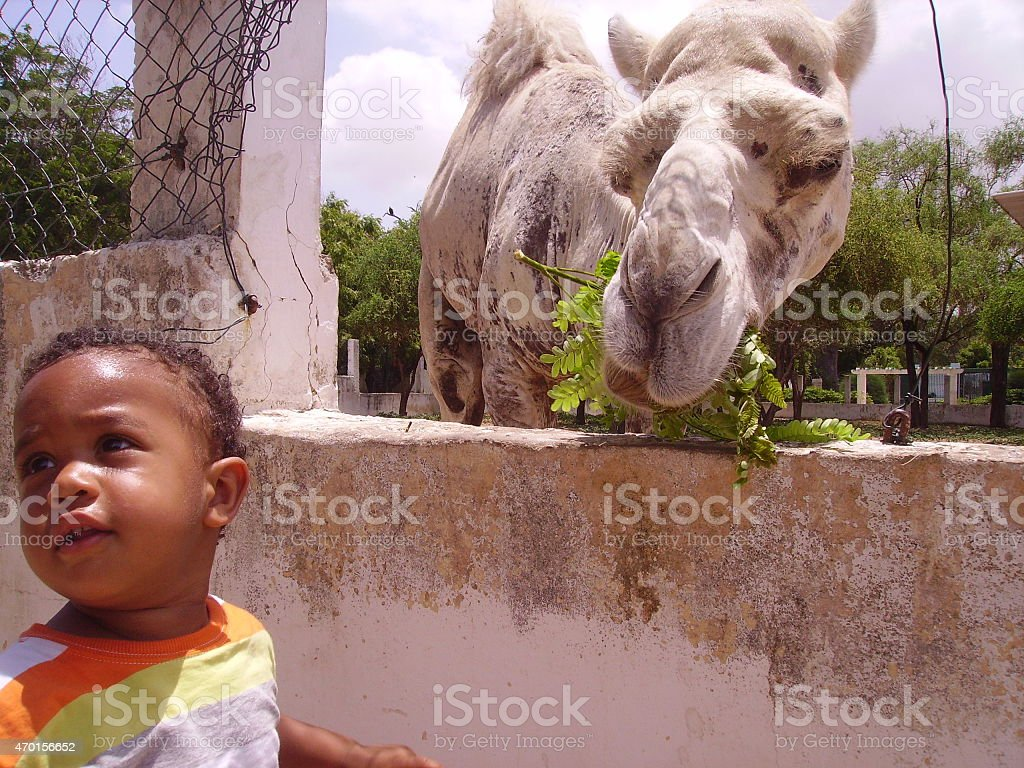 Child with camel stock photo