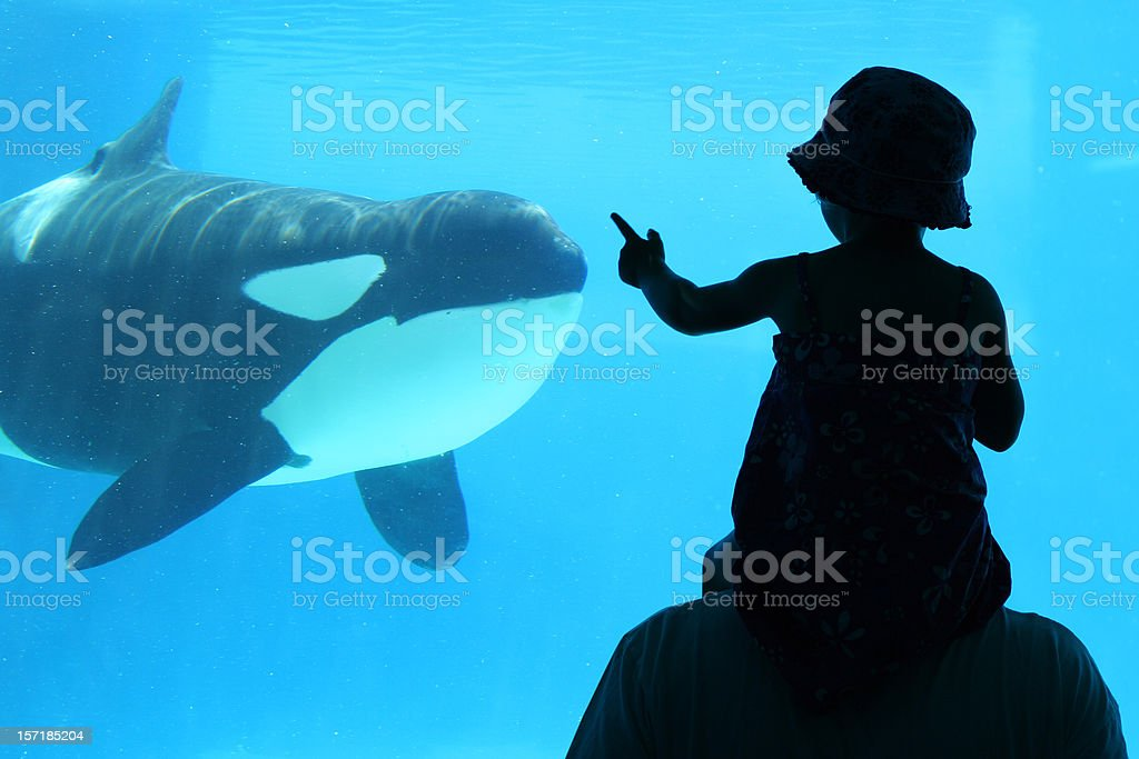 Child with Dad at aquarium royalty-free stock photo