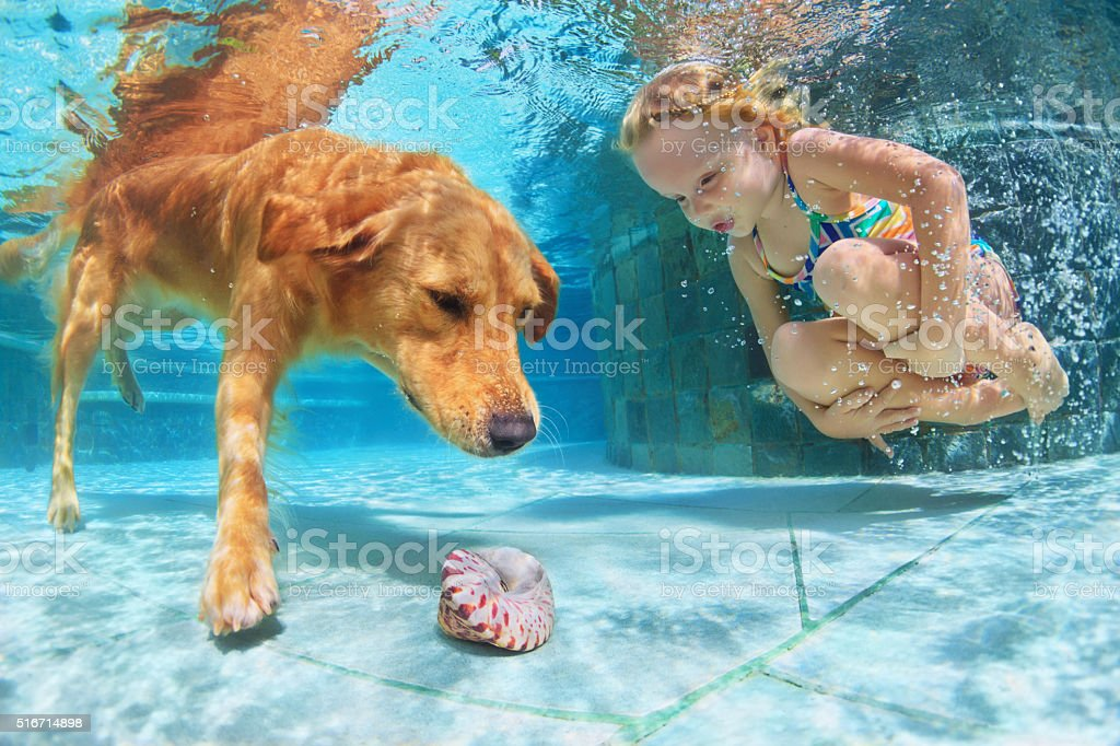 Child with dog dive underwater in swimming pool stock photo