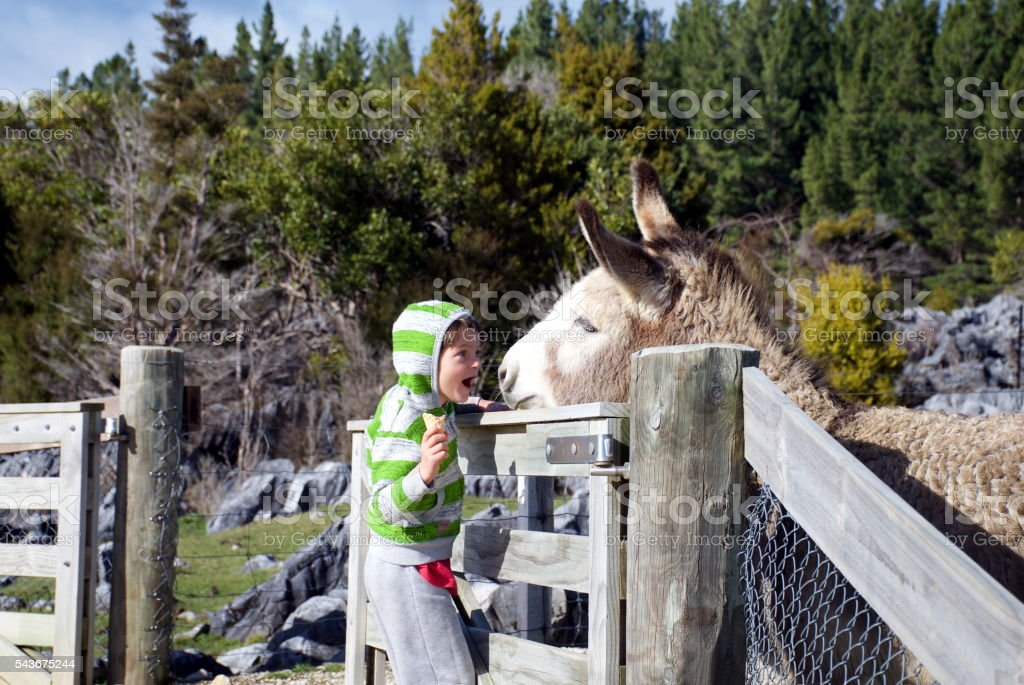 Child with Ice-cream  Smiles at Donkey stock photo