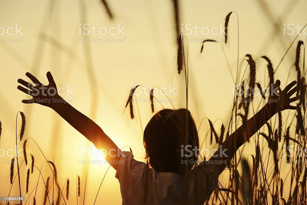 Child with outstretched arms in field at sunset stock photo