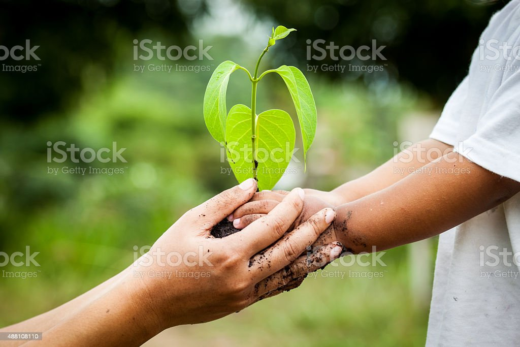 Child with parents hand holding young tree in soil together stock photo