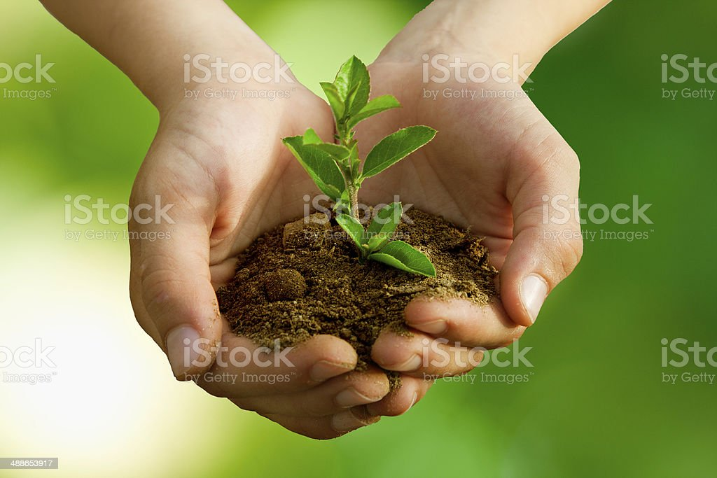 child with plant stock photo