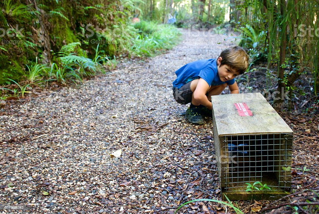 Child with Predator Trap in National Parkland, New Zealand stock photo