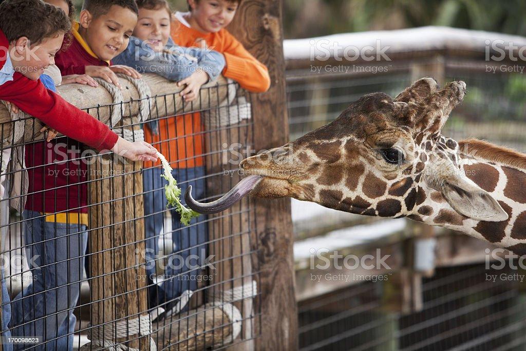 Children at zoo feeding giraffe royalty-free stock photo