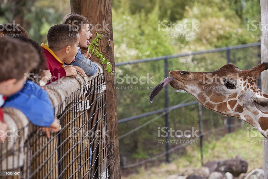 Children at zoo feeding giraffe stock photo