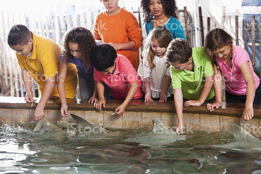 Children at zoo stingray exhibit stock photo