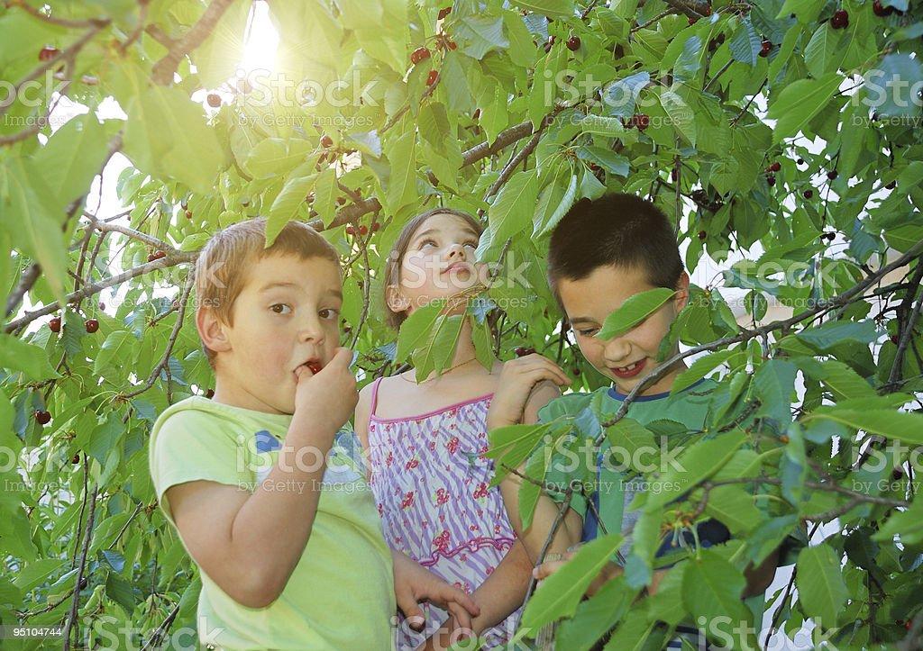 Children eating bing cherries royalty-free stock photo
