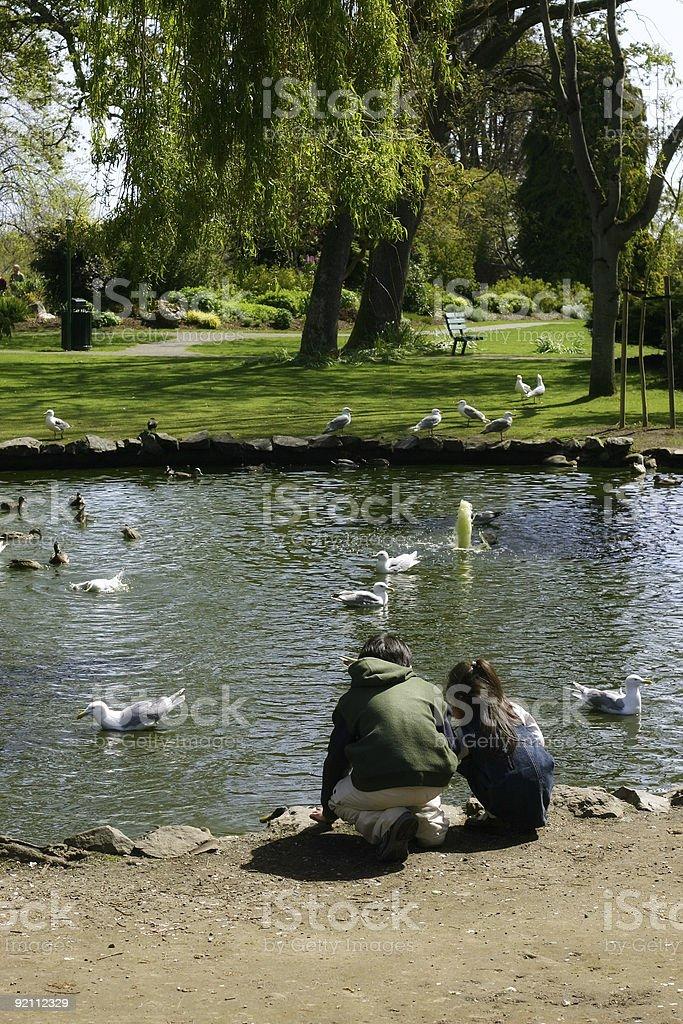 Children feeding the birds at park royalty-free stock photo