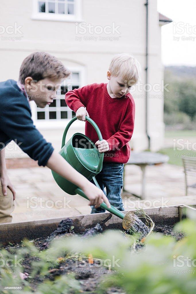 Children gardening stock photo