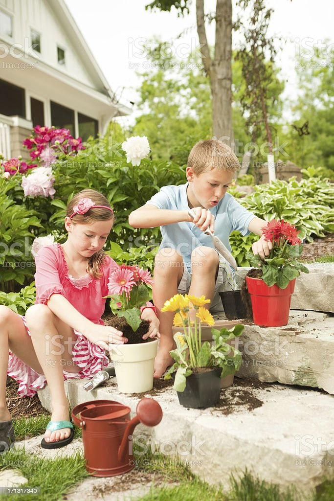 Children Gardening, Siblings Planting Spring Flower Pots Together at Home stock photo