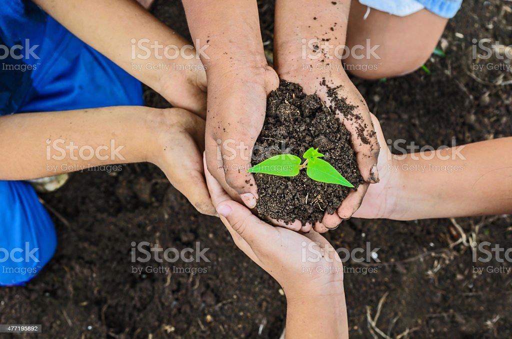 children hand and tree stock photo