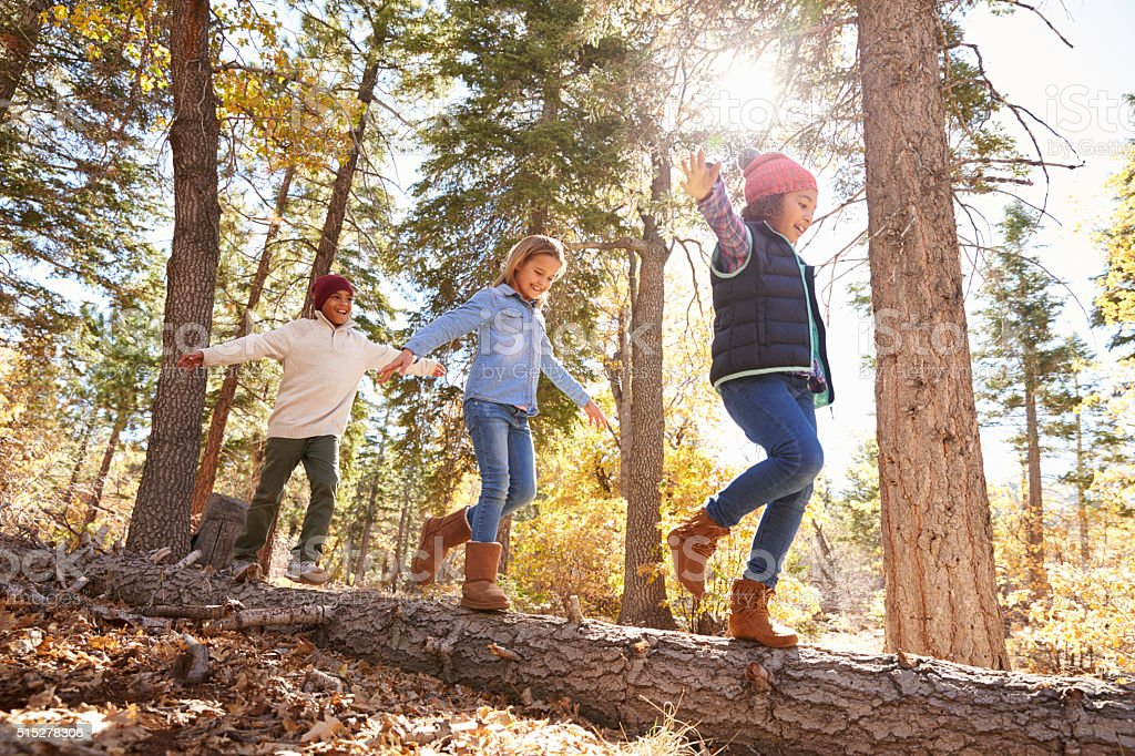 Children Having Fun And Balancing On Tree In Fall Woodland stock photo