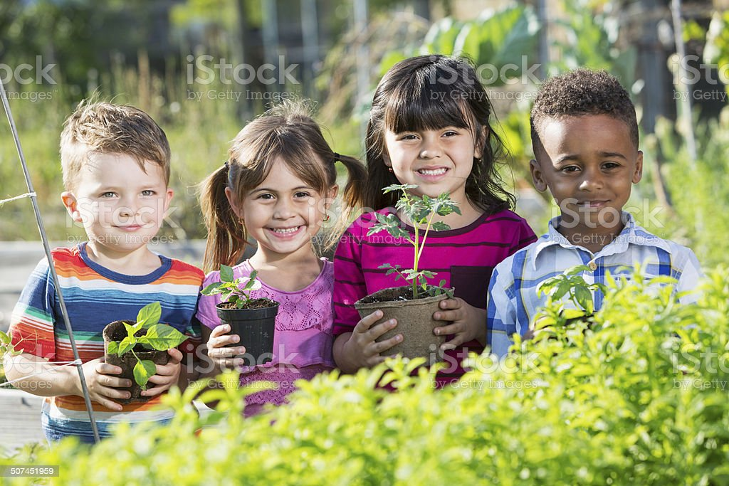 Children in garden holding seedlings stock photo