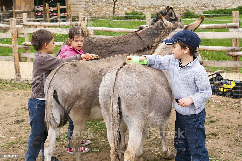 Children in the farm royalty-free stock photo