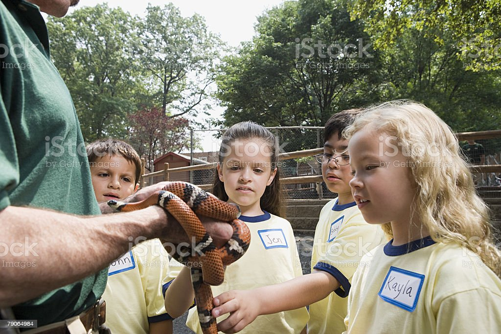 Children looking at snake stock photo