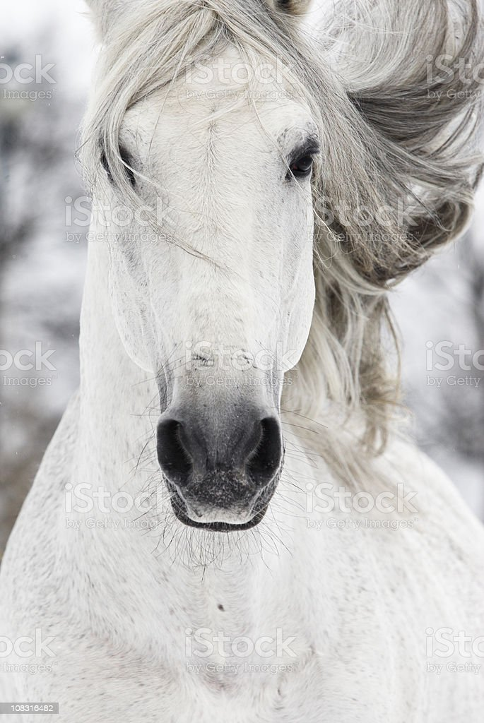 Children of the wind royalty-free stock photo