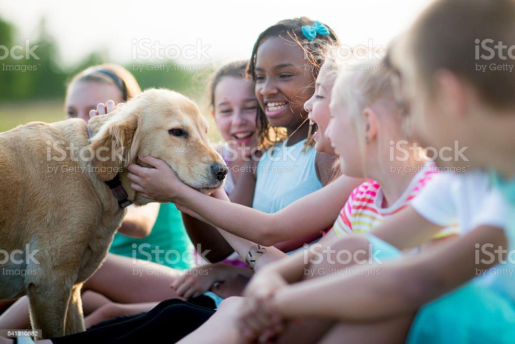 Children Petting a Dog stock photo