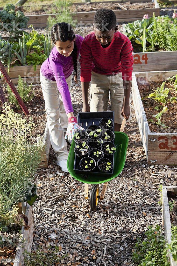 Children planting vegetable seedlings stock photo
